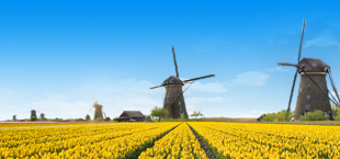 Windmolens en geel tulpenveld in Nederland