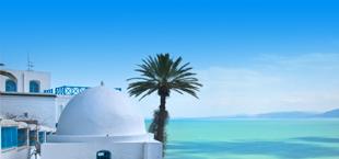 Typische witte huizen met palmboom in Tunesië