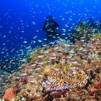 Onderwaterwereld met school vissen bij Marsa Alam Egypte
