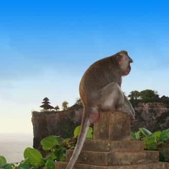 Aap op steen in Bali met mooi uitzicht