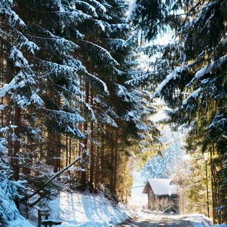 Besneeuwd bos met huisje in Flachau Oostenrijk