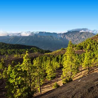 Cumbre Nueva op La Palma bomen en bergen