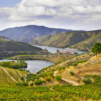 De wijnvelden aan de Douro rivier dichtbij Porto, Portugal