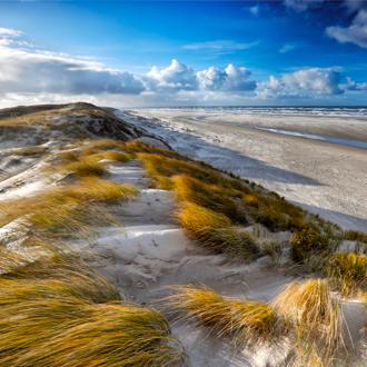 Duinen met gras op Texel