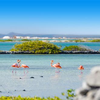 Flamingo's bij de zoutpannen in het zuiden van Bonaire