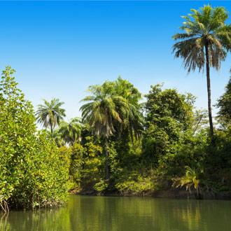 Gambia rivier met bossen