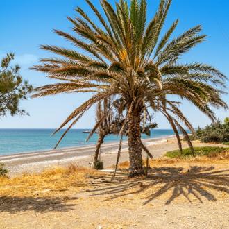 Een palmboom op het strand van Kiotari