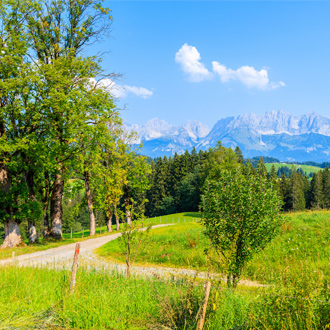 Groene omgeving met alpenweides in Kirchberg