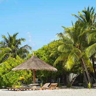 Groene palmbomen op het strand van Lhaviyani Atol