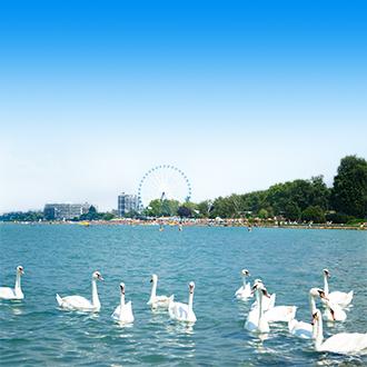 Het Balatonmeer met zwanen in Hongarije