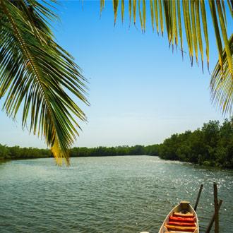 Gambia rivier met palmboom