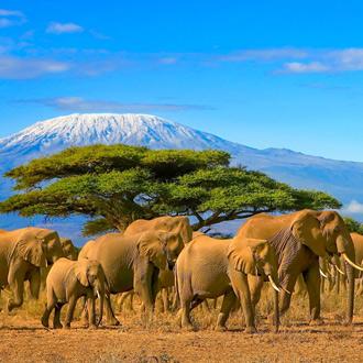 Olifanten op de voorgrond met op de achtergrond de Kilimanjaro in Tanzania