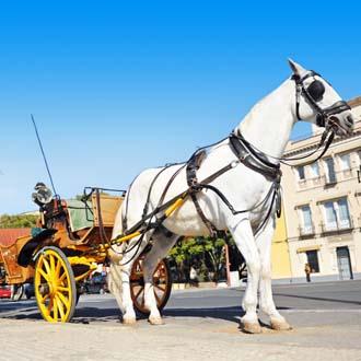 Wit paard voor een koets in Sevilla