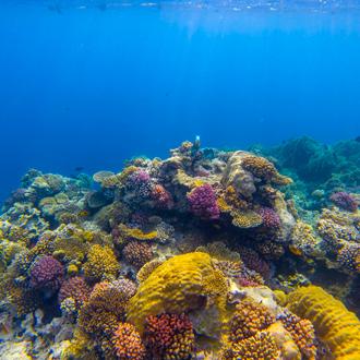 Koraal in zee Makadi Bay