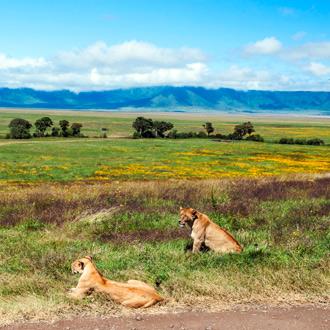 Leeuwen in Tanzania met natuurlandschap