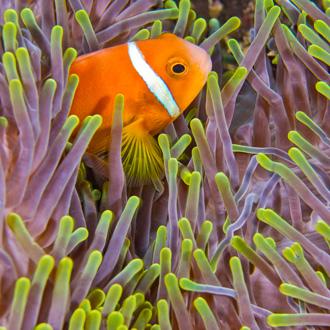 Foto van koraalrif met tropische vissen