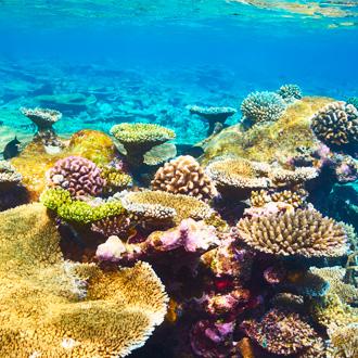 Foto van koraalrif op Zuid Ari Atoll