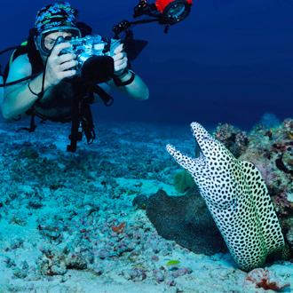 Duiker die een foto maakt onder water van een luipaard mureen
