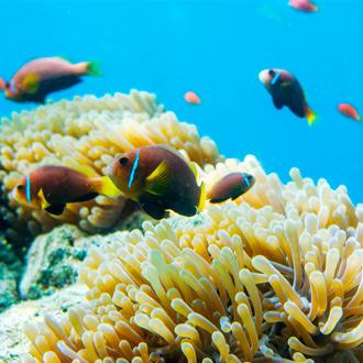 Onderwaterwereld met tropische vissen op de Malediven