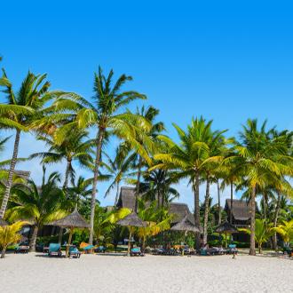 Palmbomen op het Grand Baie strand op het meest noordelijke puntje van Mauritius