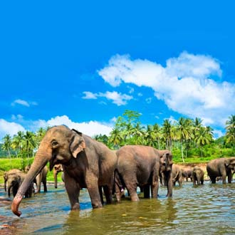 Olifanten wassen in rivier Sri Lanka