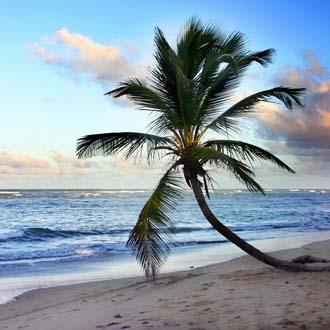 Palmboom op het strand van Sosua