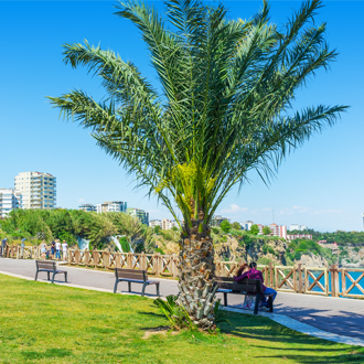 Parkje en palmboom in Lara