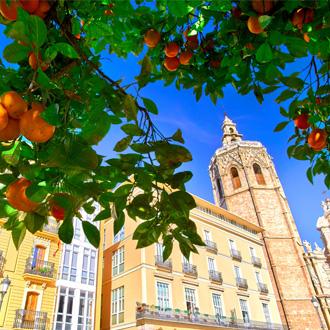 Plaza de la Reina met sinaasappelbomen in Valencia, Spanje