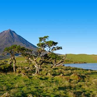 Vulkaaneiland Pico