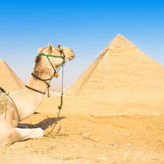 Kameel en pyramide in Egypte