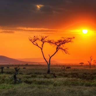 Zonsondergang in Serengeti National Park in Kenia
