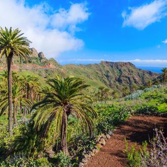 Palmbomen in een bergvallei met oceaan op de achtergrond in La Gomera