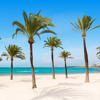 Palmbomen op een parelwit strand El Arenal, Mallorca