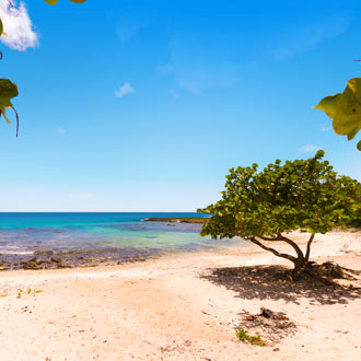 Strand met rotsen en groene boom bij Bayahibe in de Dominicaanse Republiek