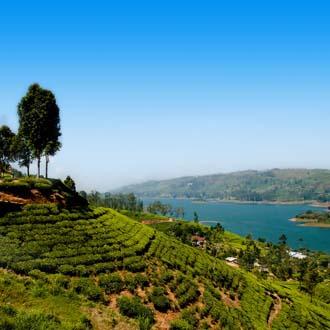 Theeplantage Nuwara Eliya