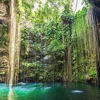 Tropisch regenwoud in Yucatan