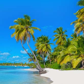 Tropisch wit strand met wuivende palmbomen Mauritius