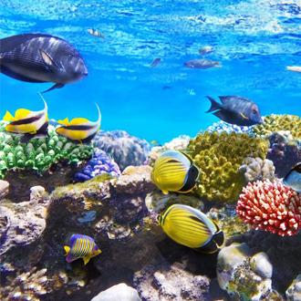 Gekleurde vissen en koraal in zee Hurghada