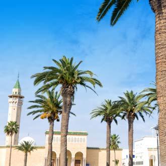 Palmbomen bij de moskee in Monastir