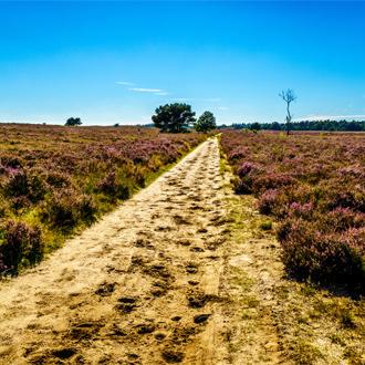 Pad door de Paarse Heide op de Veluwe in Gelderland