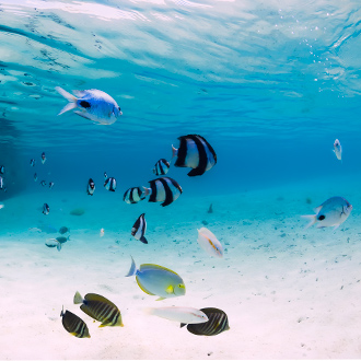 Onderwaterleven met gekleurde vissen
