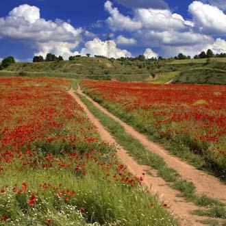 Weideveld met rode bloemen in Estland