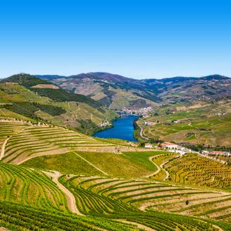 Wijngaarden in de Douro Vallei Costa Verde