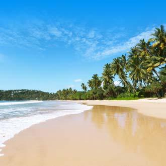 Geel zandstrand met Palmbomen op Sri Lanka