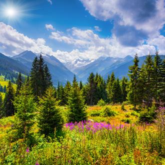 Groene bergweides met bloemen en bergen in de zomer in Gerlos, Oostenrijk