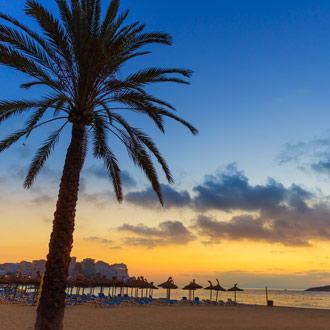 Palmboom op het strand bij zonsondergang in Magaluf