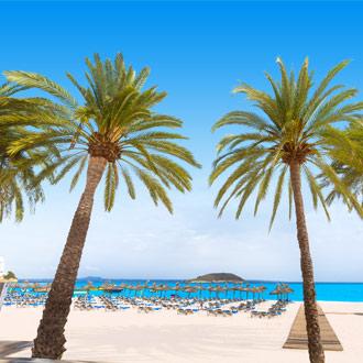 Twee palmbomen op het strand van Magaluf