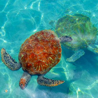 Onderwaterwereld, met schilpadden
