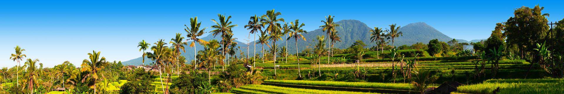 Uitzicht op bergen en palmbomen in Indonesie