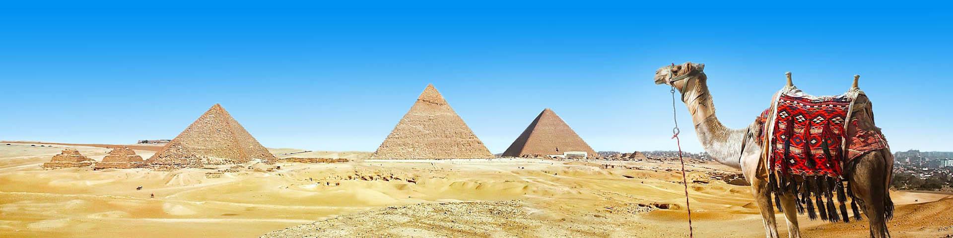 Pyramides en kamelen in Egypte